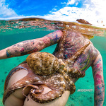 Octopus tentacles xxx nude underwater photos